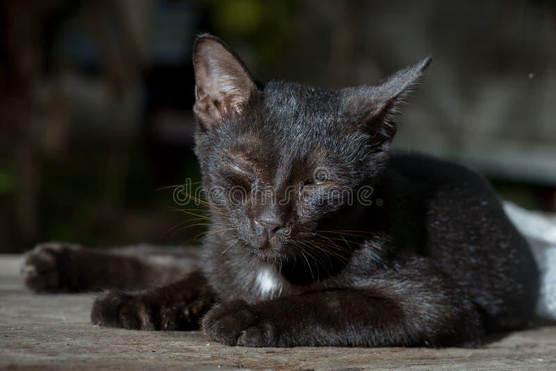 den svarta katten är sjukt ligga på det trä royaltyfri bild
