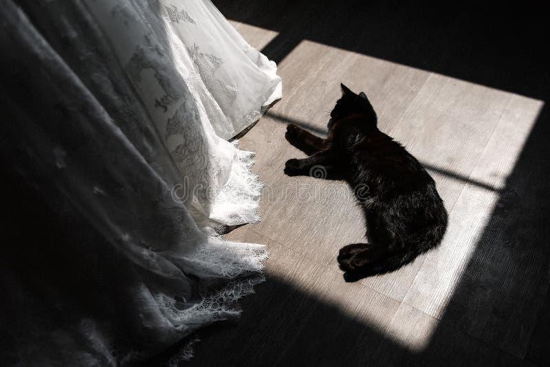 Den svarta katten ligger på golv bredvid bröllopsklänningen royaltyfria foton