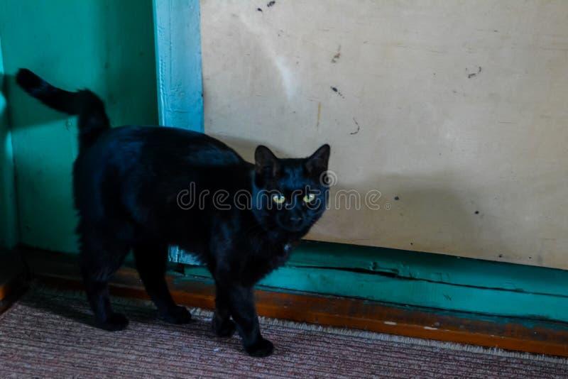 Den svarta katten med gula ?gon royaltyfri fotografi
