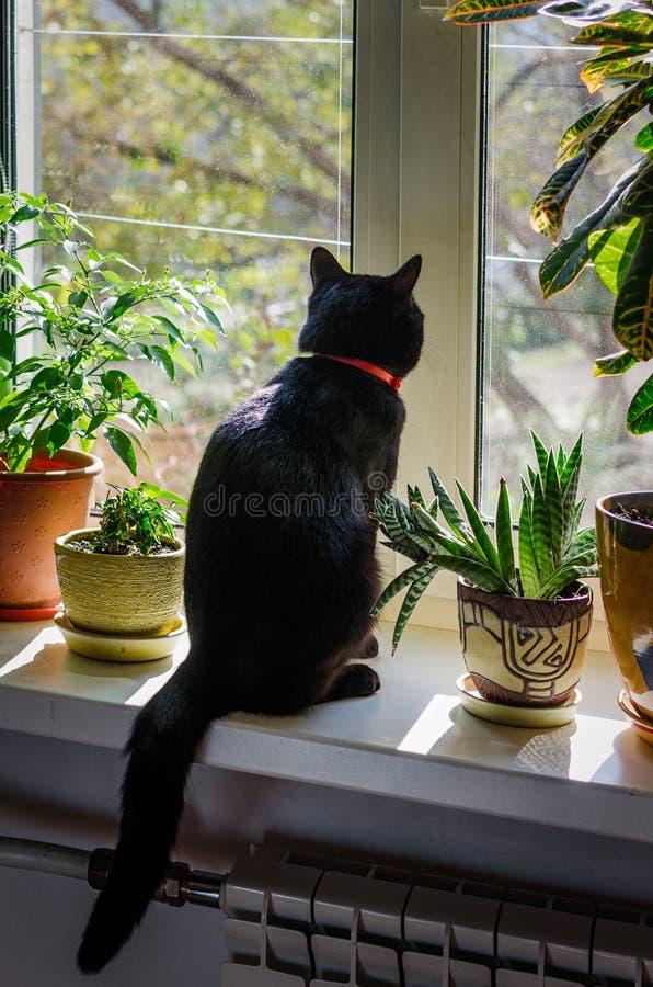 Den svarta katten sitter och ser ut fönstret royaltyfri foto