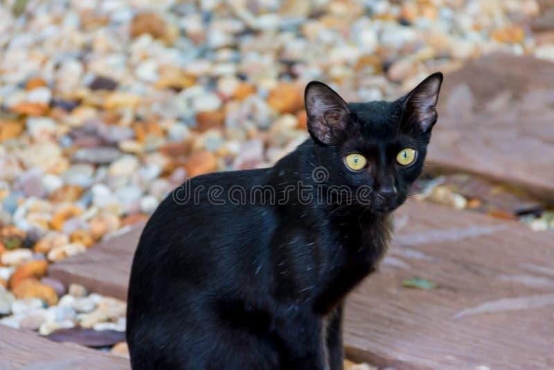 Den svarta katten sitter på golvet royaltyfria bilder