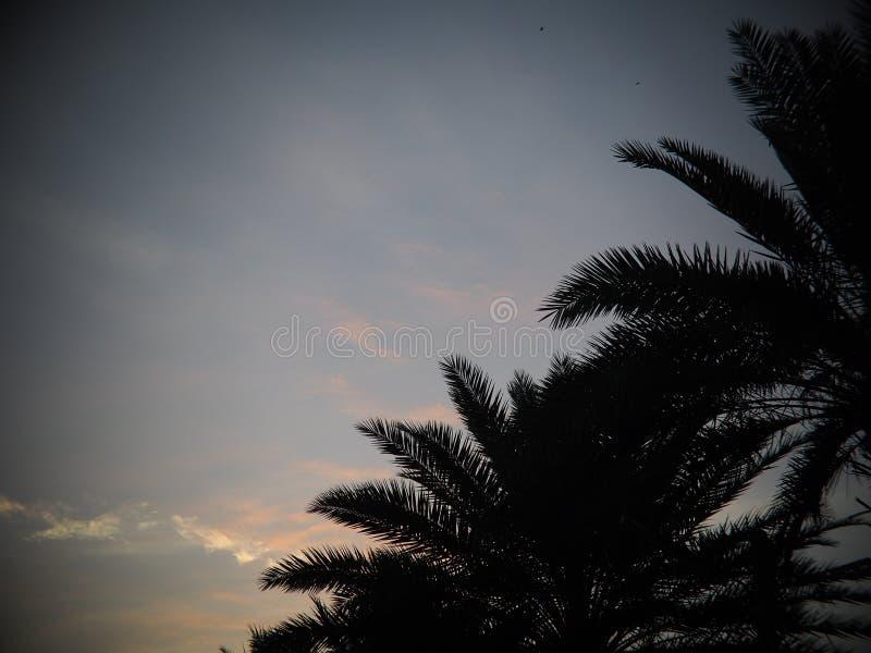 Den svarta konturpalmträdet lämnar översiktsskymningtid royaltyfri foto
