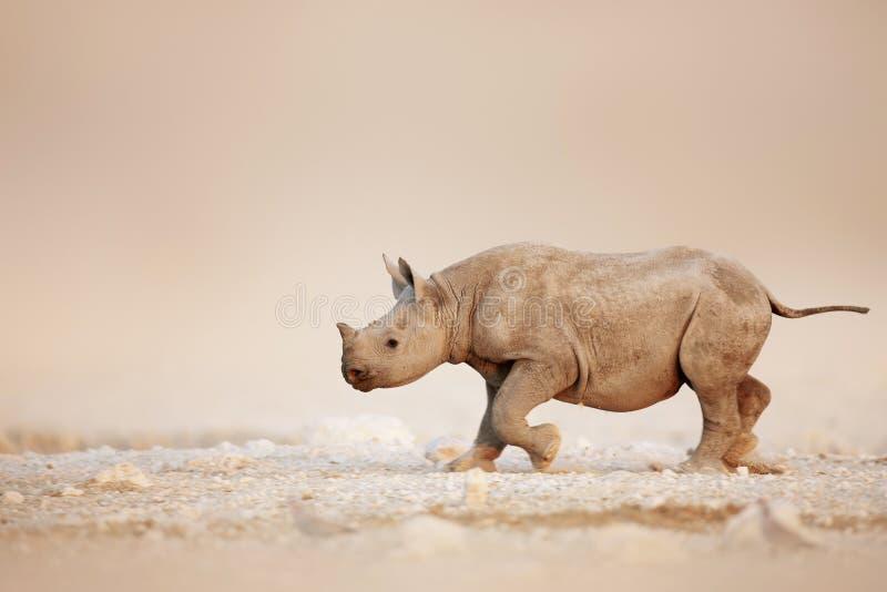 Den svarta noshörningen behandla som ett barn running arkivbild