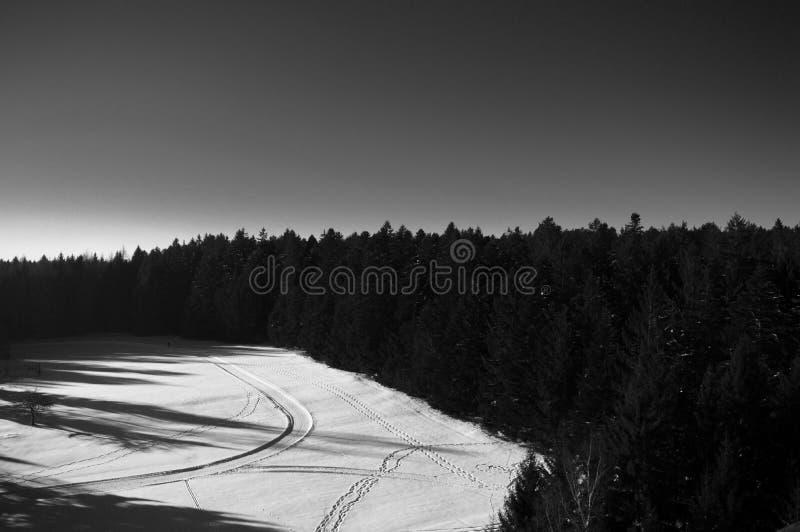 Den svarta skogen i Tyskland arkivbilder