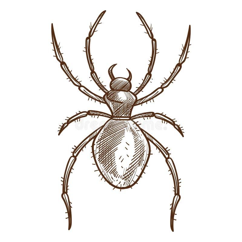 Den svarta spindeln åtta-lade benen på ryggen den rov- spindeldjuret med den unsegmented kroppen stock illustrationer