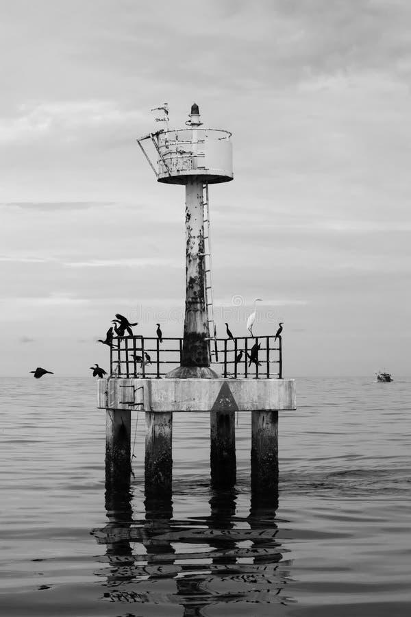 Den svartvita bakgrunden av fyren med fåglar i havet, Thailand royaltyfri foto