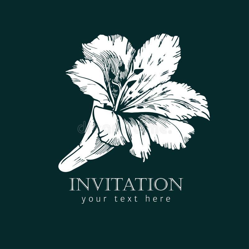 Den svartvita färgpulverlinjen stil skissar blomman Hand målad Alstroemeria stock illustrationer