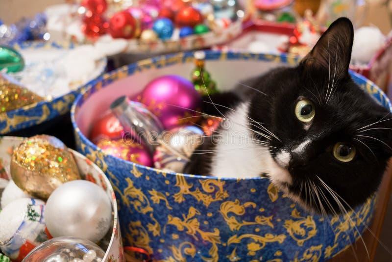 Den svartvita katten ligger i rund ask med julpynt och ser kameran royaltyfria bilder