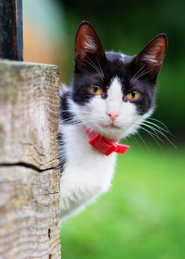 Den svartvita katten ser härlig, bakgrundsgräs royaltyfria foton