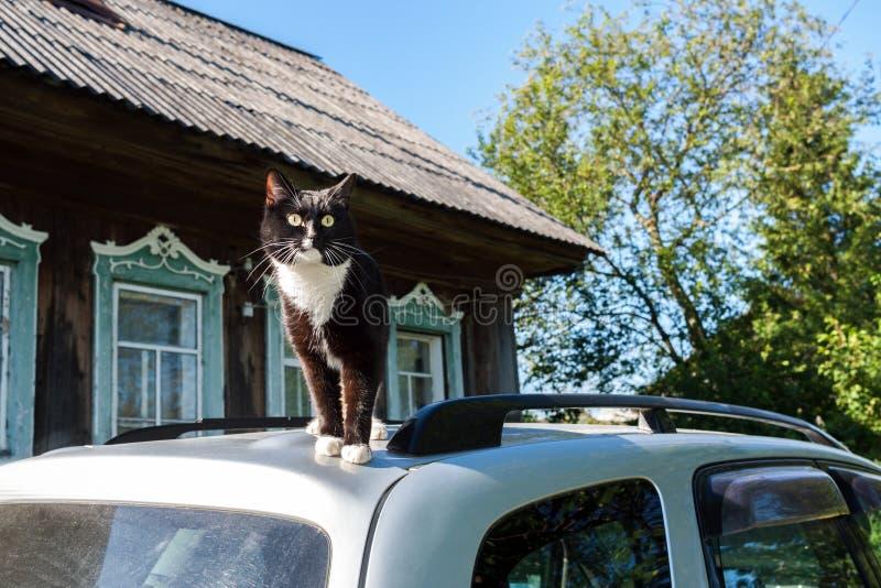 Den svartvita katten står på taket av bilen nära byhus fotografering för bildbyråer