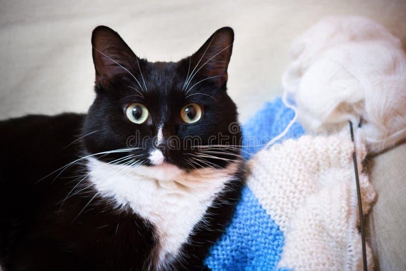 Den svartvita närbilden ligger på den ljusa beigea soffan som ser fotografering för bildbyråer