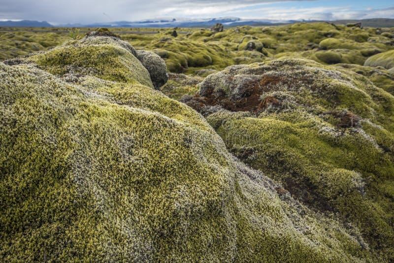 Den täckte typiska isländska sikten av mossa vaggar och glaciärer royaltyfria foton