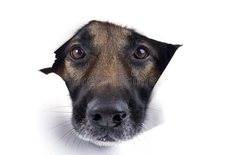 den täta hunden tystar ned upp arkivbilder