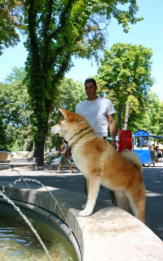 Den törstiga hunden parkerar offentligt royaltyfri foto