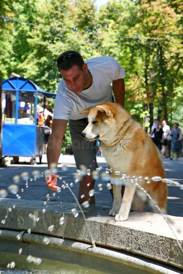 Den törstiga hunden parkerar offentligt royaltyfri fotografi