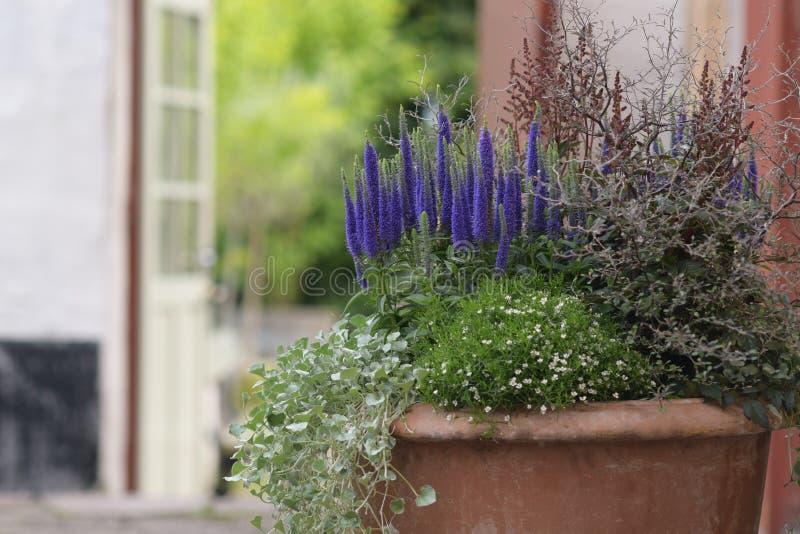 Den Terracota krukan av blommor kortsluter mycket dof royaltyfri foto