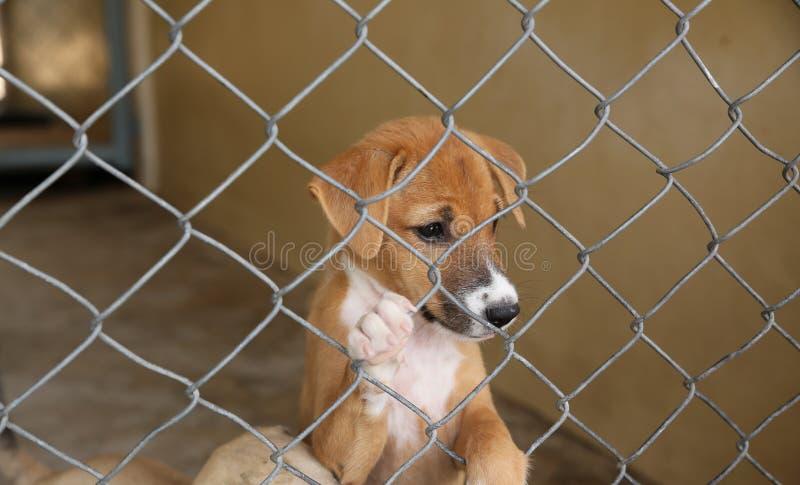 Den thailändska hunden, i att vänta för bur, adopterar till det nya hemmet royaltyfria foton
