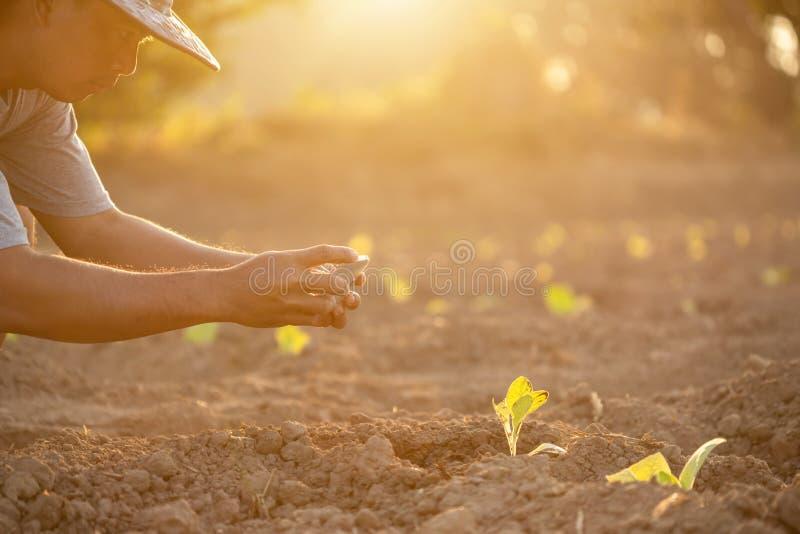 Den thailändska jordbrukaren fotograferar ung grön tobak på fältet i norra Thailand royaltyfria foton