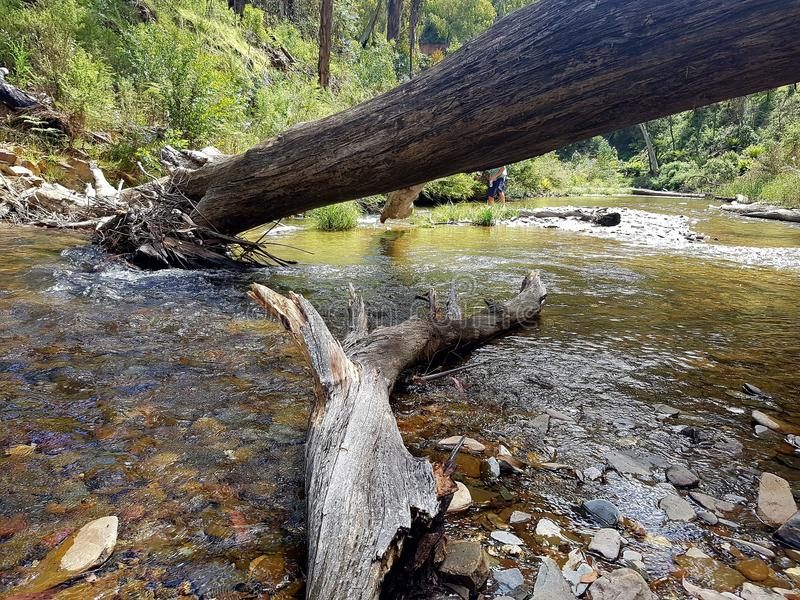 Den thompson floden fotografering för bildbyråer