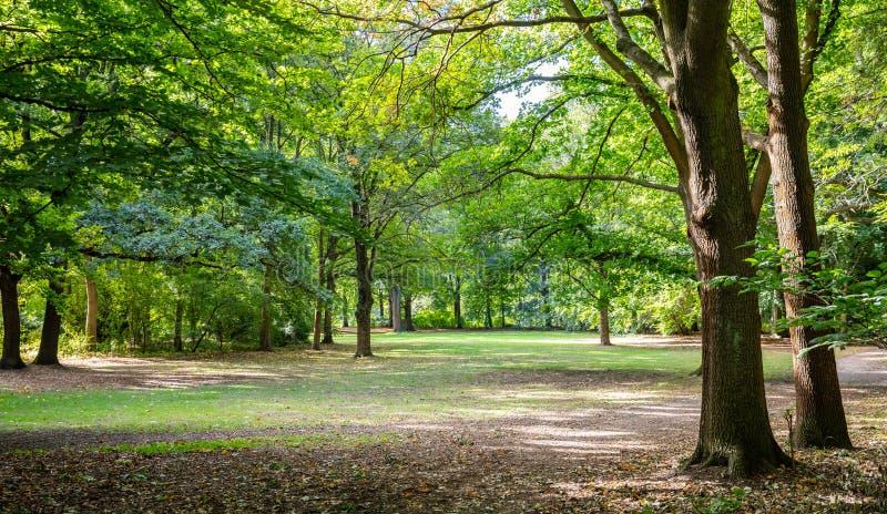 Den Tiergarten staden parkerar i Berlin, Tyskland Sikt av gräsfältet och träd arkivfoto