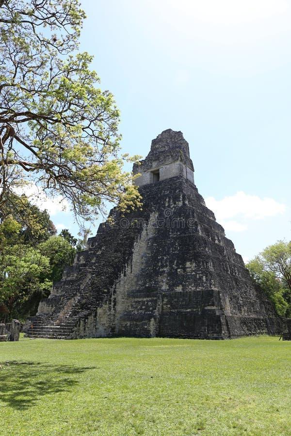 Den Tikal nationalparken nära Flores i Guatemala, jaguartempel är den berömda pyramiden i Tikal arkivbild