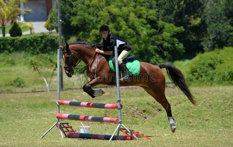 Den tillbaka ridningen för hästen - visa banhoppningen royaltyfri bild