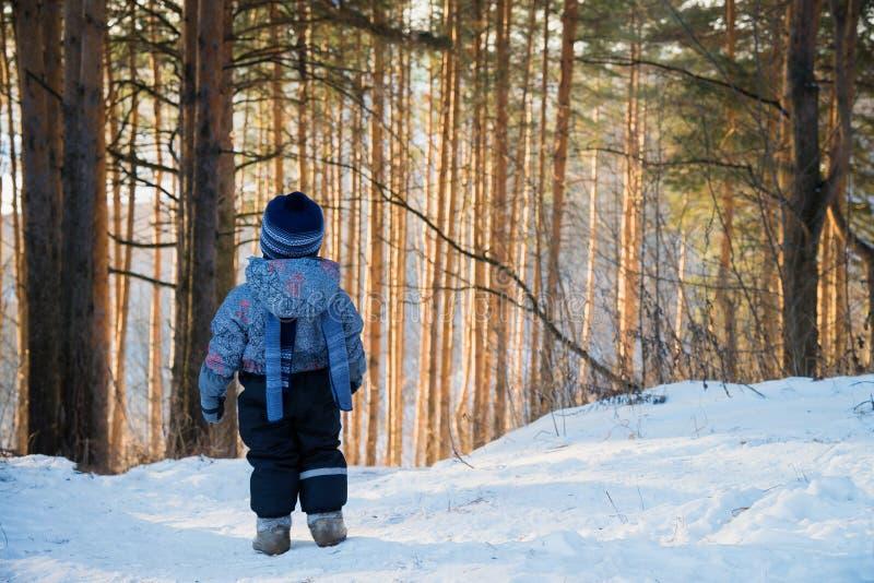 Den tillbaka sikten på den gulliga lilla litet barnpojken i varm snowsuit som går i, parkerar på en vinterdag Barndet fria i skog royaltyfria bilder