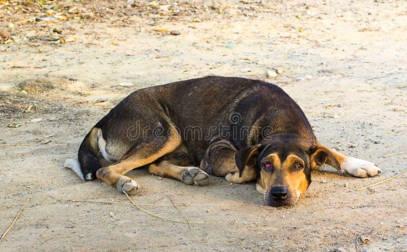 Den tillfälliga hunden som huka sig ned på jordningen arkivfoton