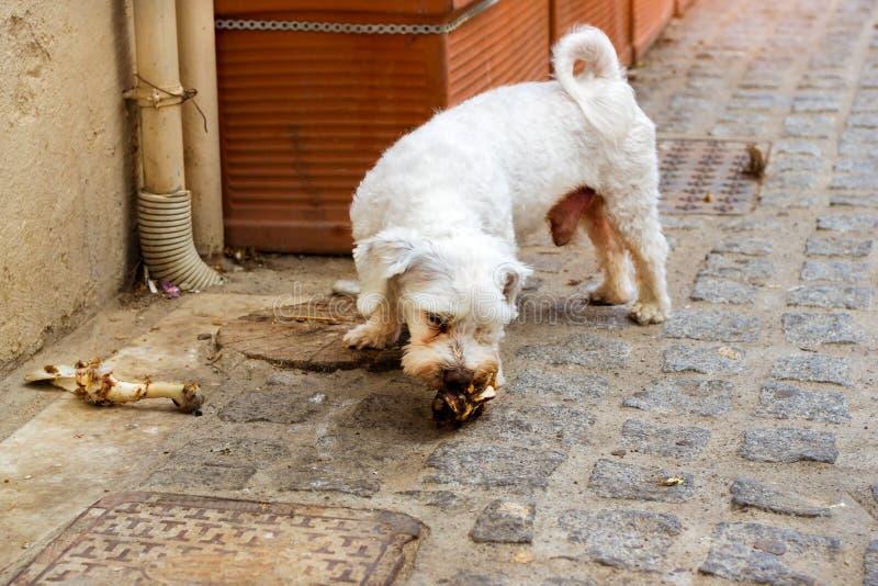 Den tillfälliga hunden tuggar ett ben på kullerstengatan royaltyfria bilder