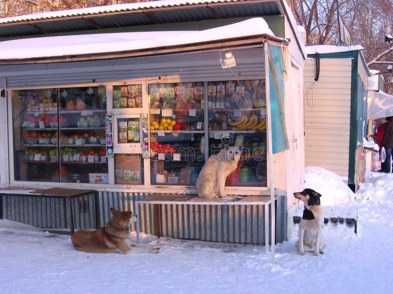 Den tillfälliga hungriga hundkapplöpningen omgav en livsmedelsbutik i den Siberian staden i vinter arkivbild
