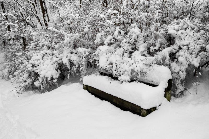 Den tjockt snö-täckte bänken, träd, buskar parkerar in royaltyfri bild