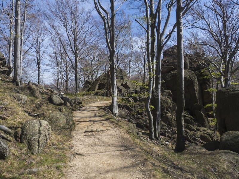 Den tomma beigea sandvandringsledvägen med vaggar, stenblock och strandträdskogen, vibrerande vårgräsplan, bakgrund för blå himme arkivfoto
