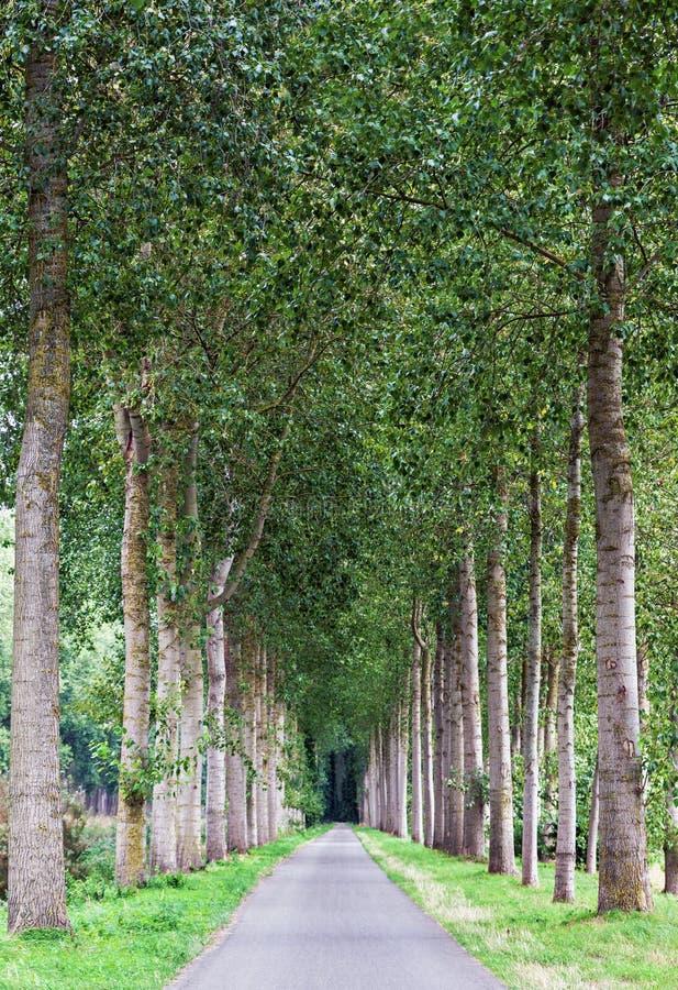 Den tomma landsvägen fodrade vid den gröna trädgränden arkivfoto