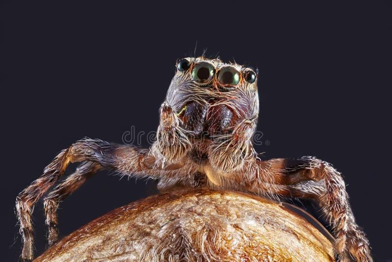 Den toppna makrobilden av spindeln, hög förstoring, goda vässar och det mycket klara detaljerat, ögat och framsidan arkivfoto