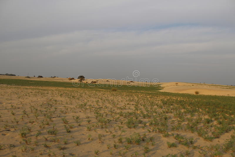 den torkade blekte öknen gräs någon fjäderstensun royaltyfria foton