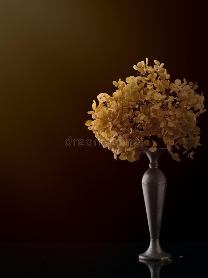 Den torkade vanliga hortensian blommar i ett vas-, minne- eller minnesbegrepp Nostalgiker av tidbortgången royaltyfri bild