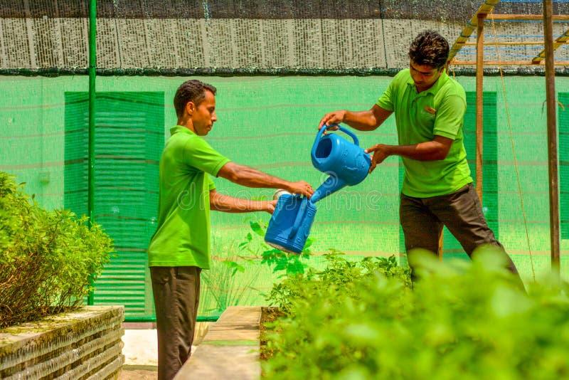 Den trädgårds- arbetaren i likformign som bevattnar växter som använder vatten, på burk arkivbild