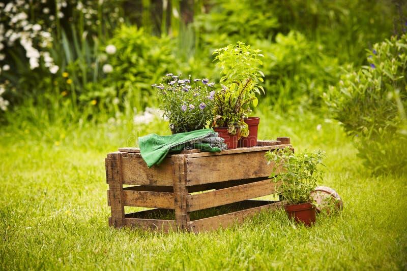 Den trädgårds- asken planterar handskar royaltyfria bilder