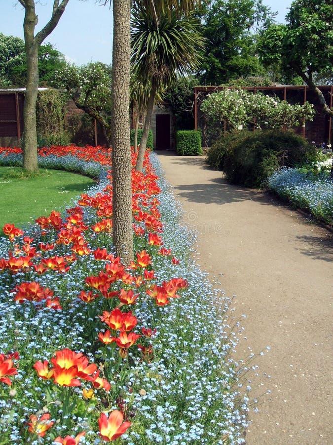 Den trädgårds- banan och den örtartade gränsen för tulpan i en safari parkerar, England royaltyfri bild