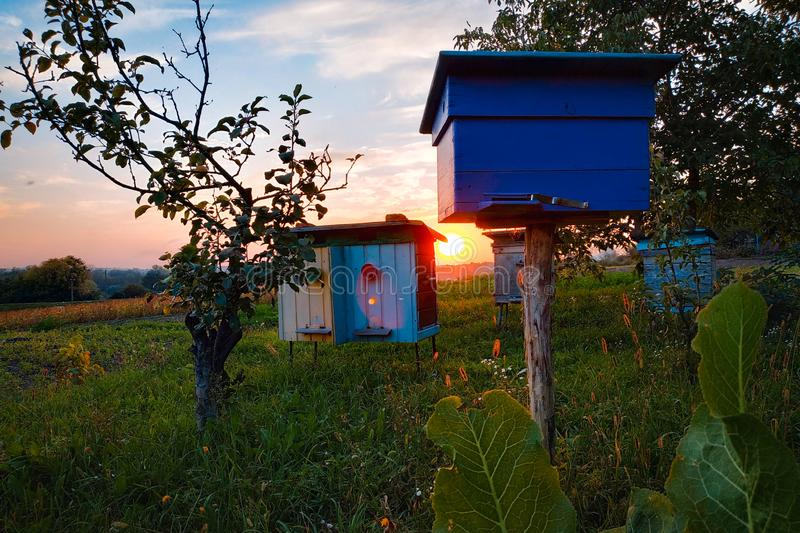 Den traditionella mobila naturen för solnedgången för honunglantgårdbikupan lämnar trädgården arkivbilder