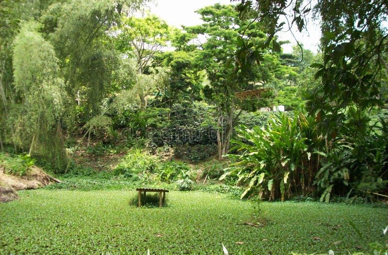 Den trevliga skogen i kaffet parkerar arkivfoton