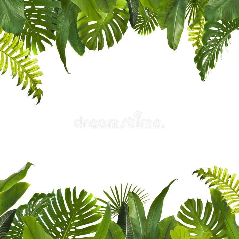 Den tropiska djungeln lämnar bakgrund arkivfoton