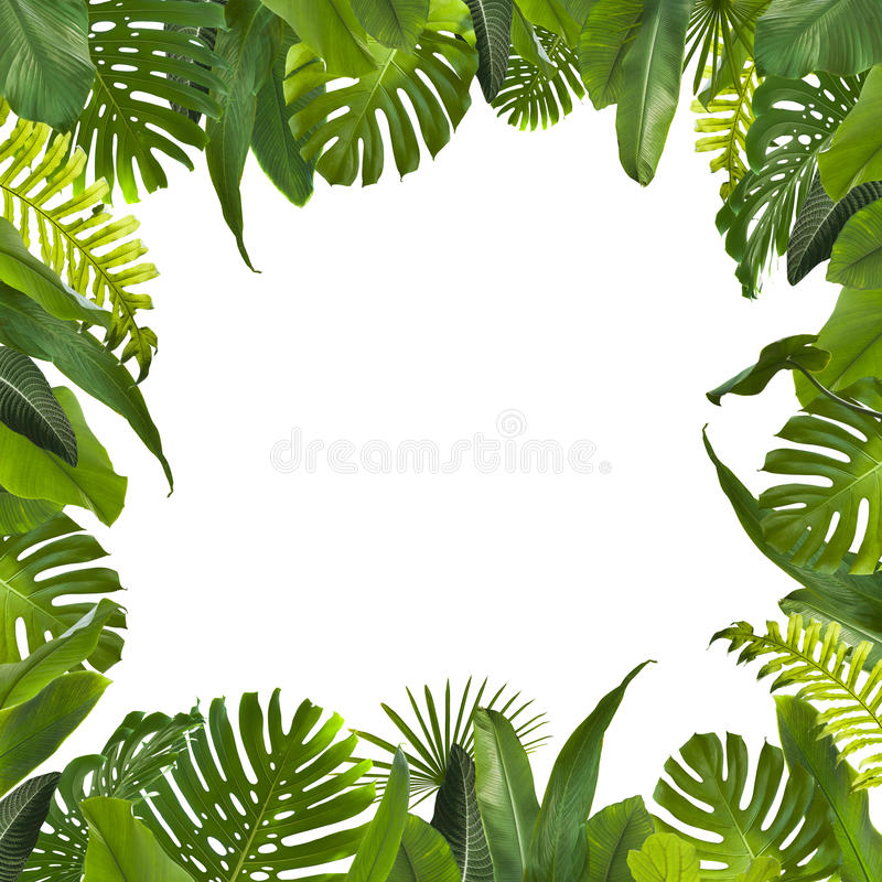 Den tropiska djungeln lämnar bakgrund royaltyfri foto