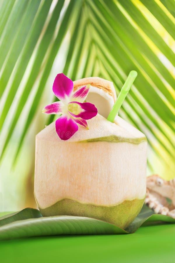 Den tropiska exotiska nya gröna kokosnötvattendrinken nära gömma i handflatan med nolla royaltyfri foto