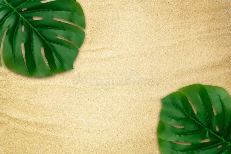 Den tropiska gröna monsteraen lämnar ramgränsen på bakgrund för strandsandtextur Design för din sommargarnering med royaltyfri fotografi