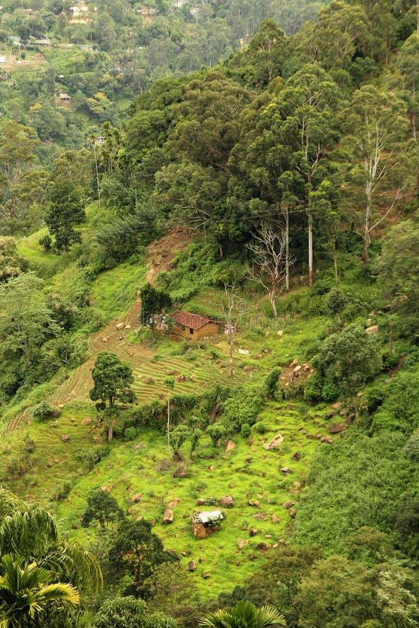 Den tropiska rainforesten landskap royaltyfri bild