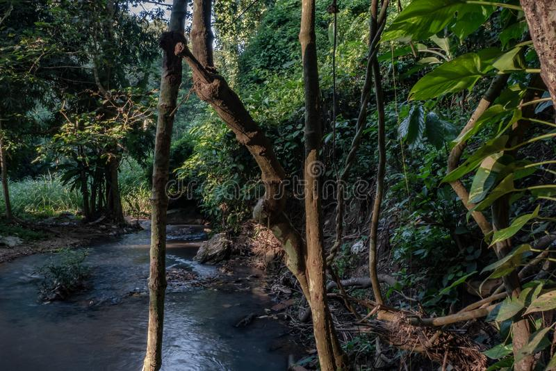 Den tropiska rainforesten och floden, regnar Forest Jungle arkivfoton