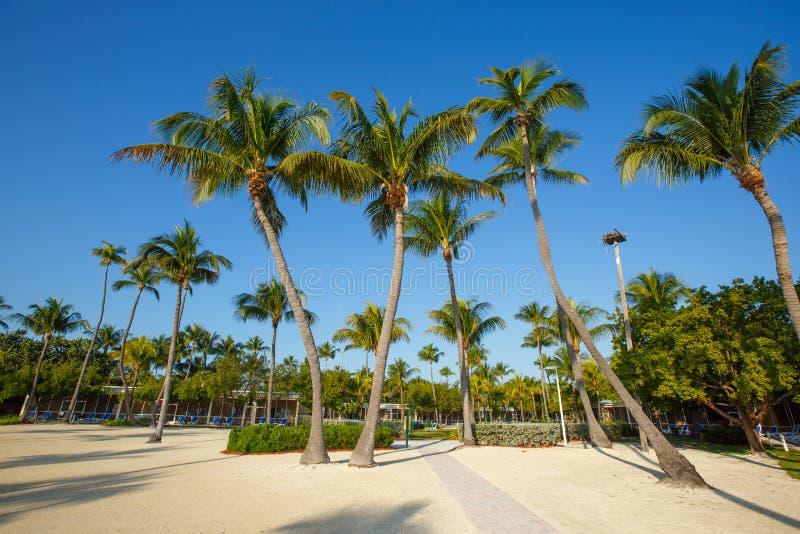 Den tropiska semesterorten med kokosnöten gömma i handflatan på den sandiga stranden royaltyfri fotografi