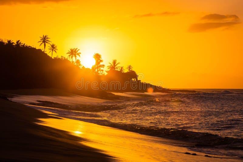 Den tropiska solnedgången på stranden med gömma i handflatan fotografering för bildbyråer