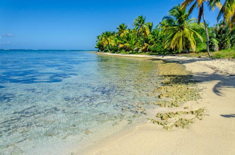 Den tropiska stranden med genomskinligt havvatten, gömma i handflatan dungen, stenar fotografering för bildbyråer